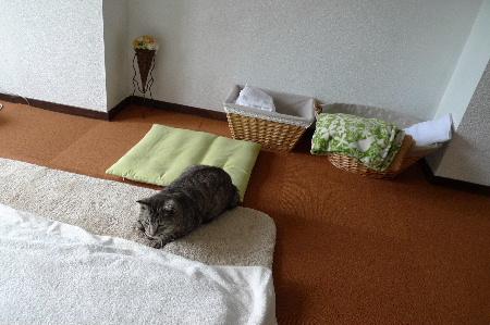 2011_0503花0060