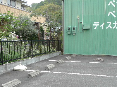 2011_0503花0062