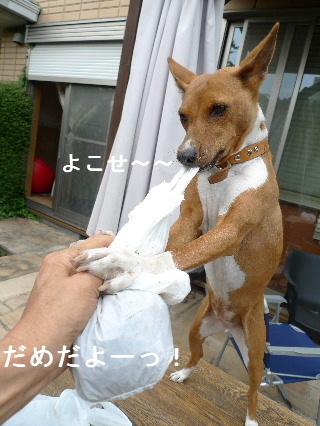 2011_0510花0045