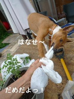 2011_0510花0048