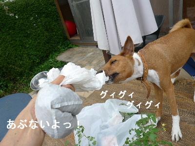 2011_0510花0051