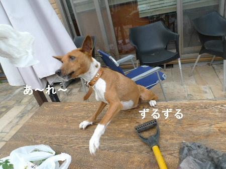 2011_0510花0052