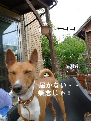2011_0510花0055