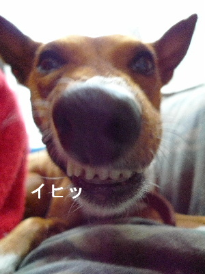 2011_0511花0093