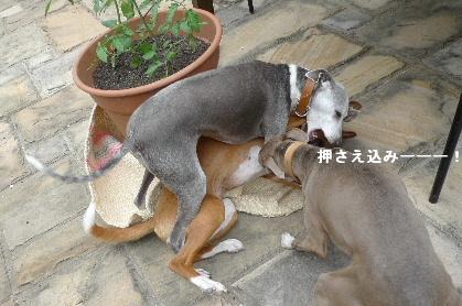 2011_0503花0021