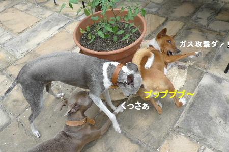 2011_0503花0013