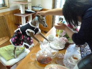 2011_0522花0099