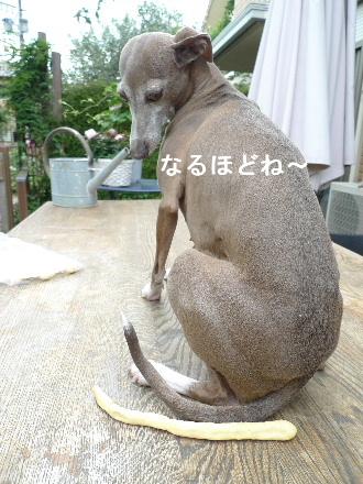 2011_0530花0009