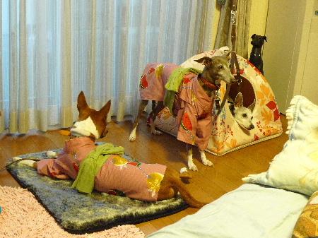 2011_0730ナッキー0048