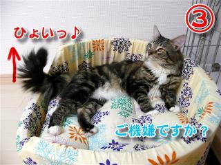猫ベッド3