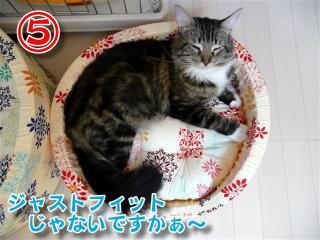 猫ベッド5