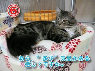 猫ベッド6