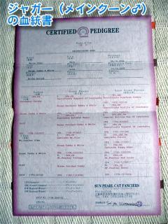 ジャガーの血統書