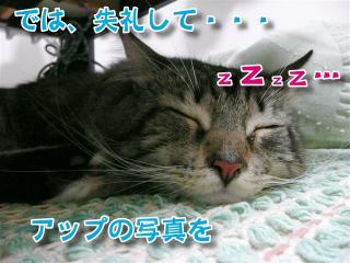 熟睡ジャガーくん2