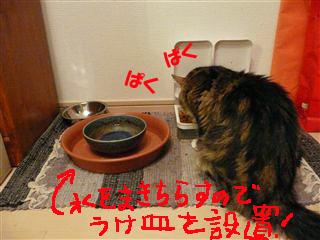 お食事風景2