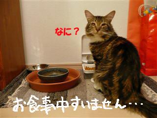 お食事風景3