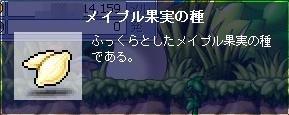 090419メイプル果実の種.JPG