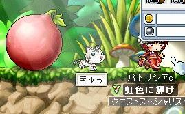 090419メイプル果実の実.JPG
