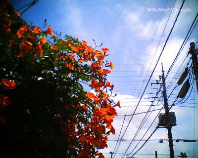 2011072702.jpg