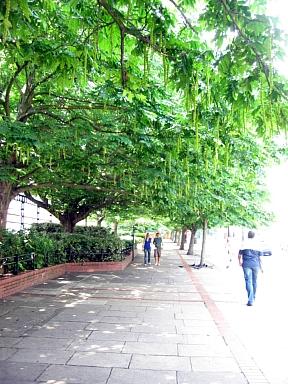 エッジウェアーロード 並木道