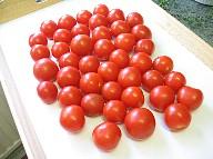 トマト12%