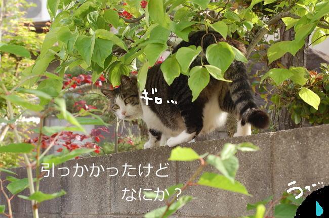 DSC_4180.jpg
