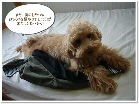 cats_20081013095357.jpg