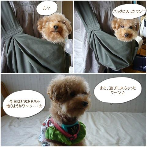 cats_20081013100656.jpg