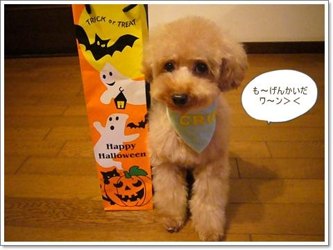 cats_20081030105733.jpg