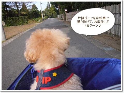 cats_20081107094654.jpg