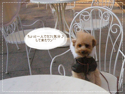 cats_20081230144249.jpg