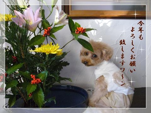 cats_20090105104819.jpg