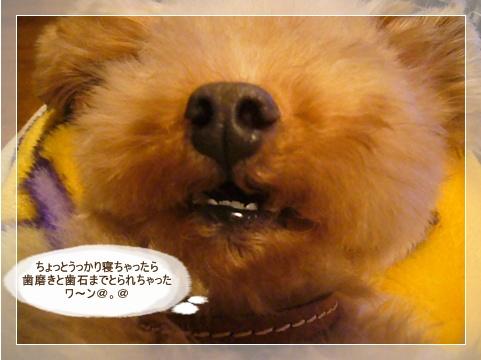 cats_20090129114146.jpg