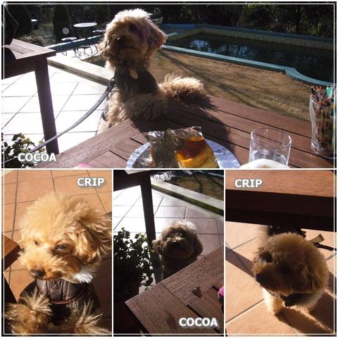 cats_20090205121355.jpg