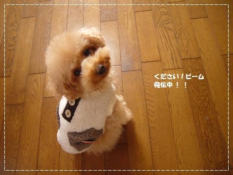 cats_20090212101732.jpg