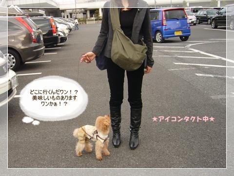 cats_20090216123941.jpg