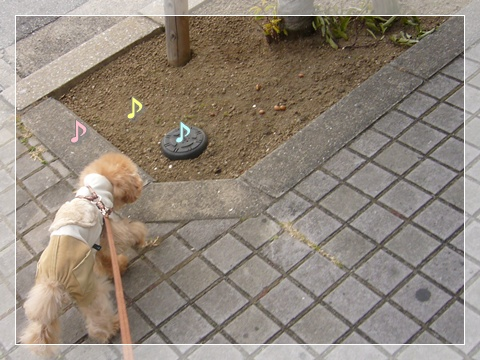 cats_20090216124441.jpg
