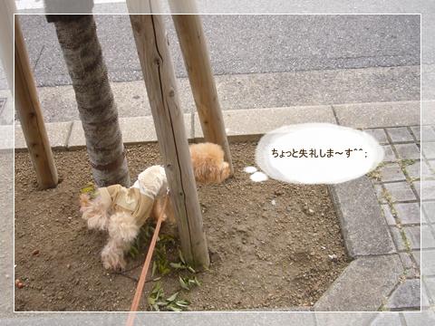 cats_20090216124634.jpg