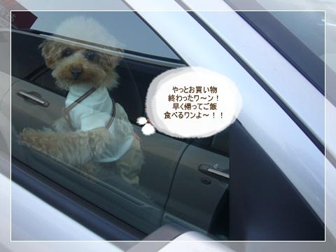 cats_20090216132519.jpg