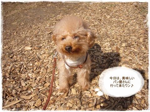 cats_20090222193322.jpg