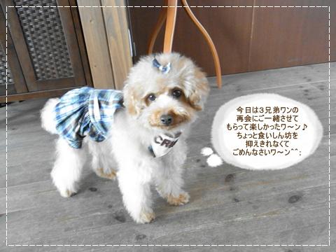 cats_20090325181501.jpg