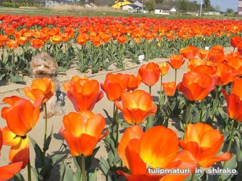 cats_20090413124249.jpg