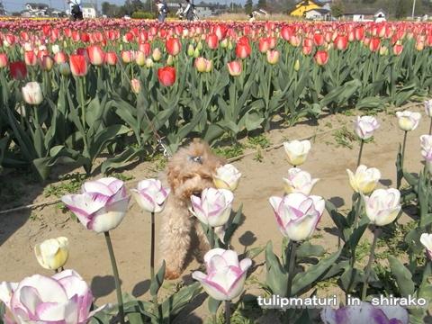 cats_20090413124359.jpg