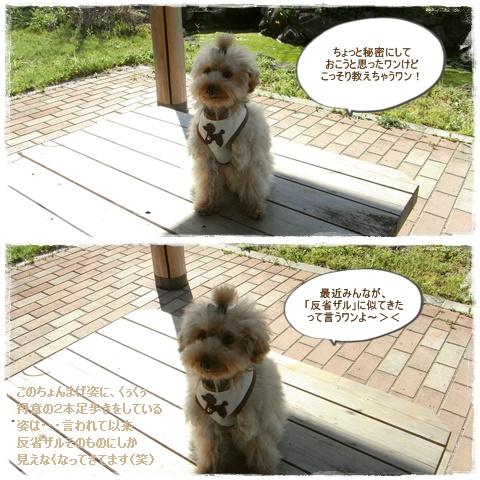 cats_20090430203939.jpg