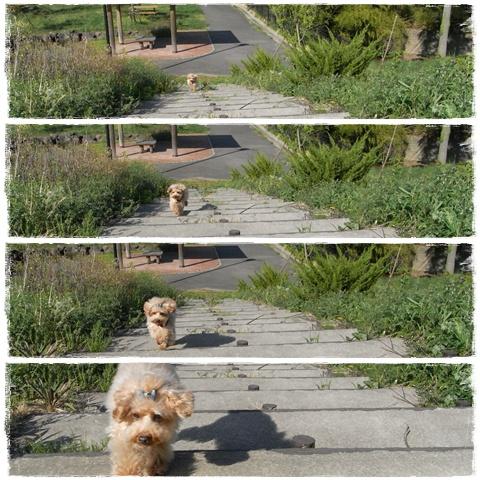cats_20090430204825.jpg