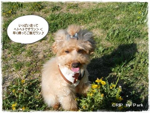 cats_20090430205751.jpg