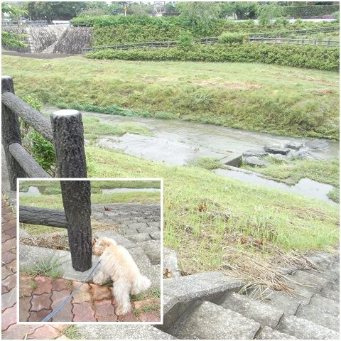cats_20090530184218.jpg