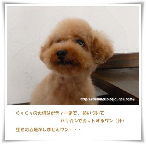 cats_20090706123029.jpg