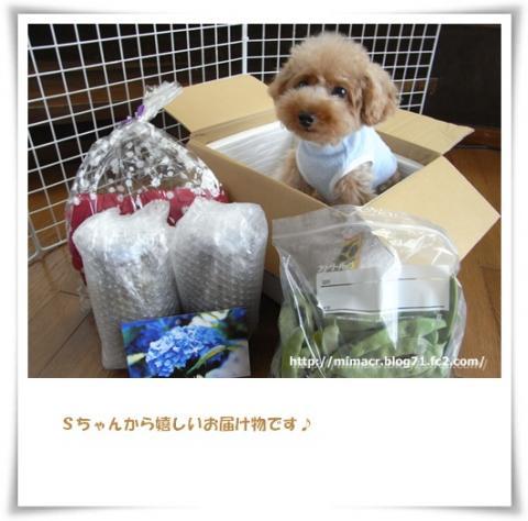 cats_20090722172718.jpg