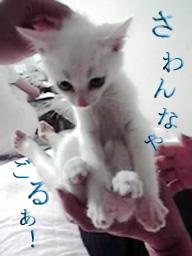 愛嬌レッスン~その後~